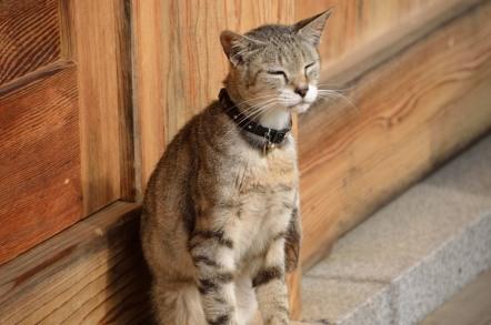 猫寺 福井県 御誕生寺