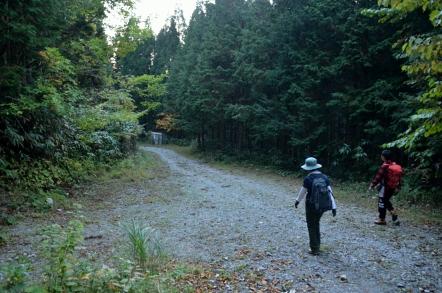 乙女渓谷キャンプ場 林道