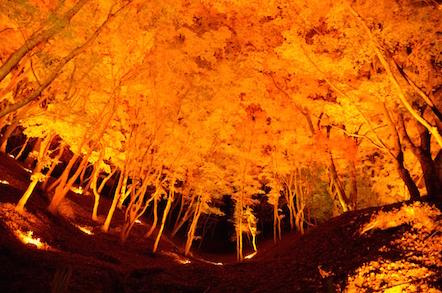 香嵐渓 ライトアップ