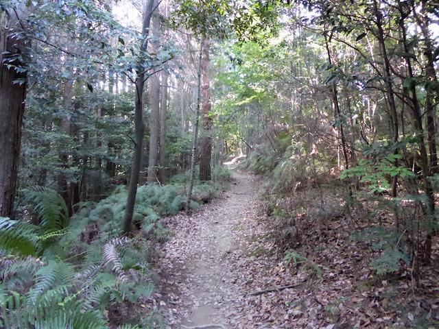 京都一周トレイル 東山コース 道標番号11 京女鳥部の森