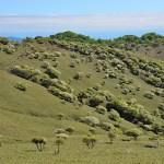 竜ヶ岳 シロヤシオ 羊の群れ