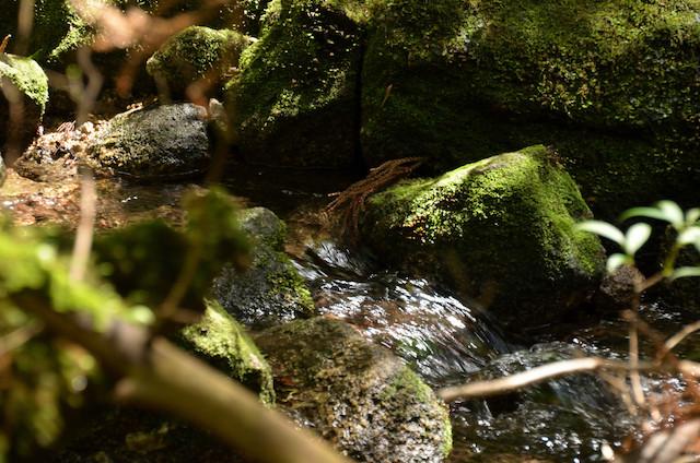屋久島 太鼓岩〜白谷雲水峡