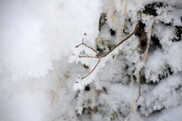 北横岳 登山 冬