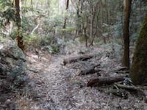 桐谷坂 登山道