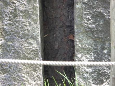 盛岡市 石割桜