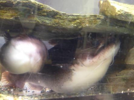 竹島水族館 パトラクス・キャット