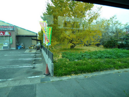 そぶえイチョウ黄葉まつり 無料シャトルバス