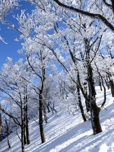 冬の綿向山へ登山!樹氷・霧氷きらめくブナ林の美しさが印象的な、とても楽しい登山でした!