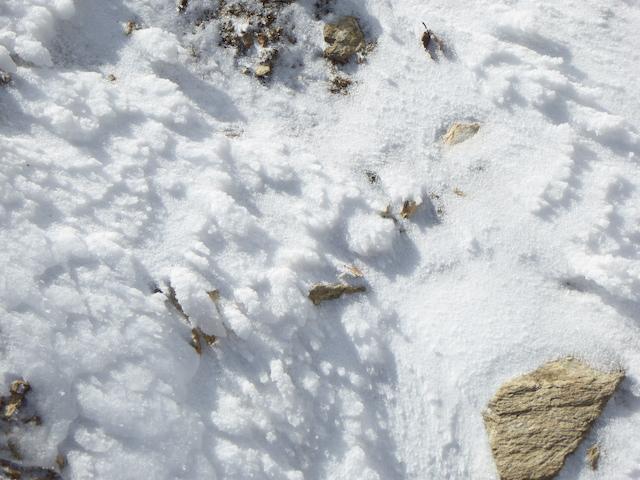 マナコ谷ルート 地面にエビの尻尾