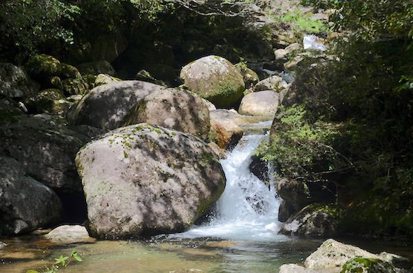 飲用可能ではない川の水