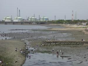 愛知県の知多半島、新舞子で無料の潮干狩り!釣りや海水浴、芝生でマッタリもできて老若男女楽しめます。