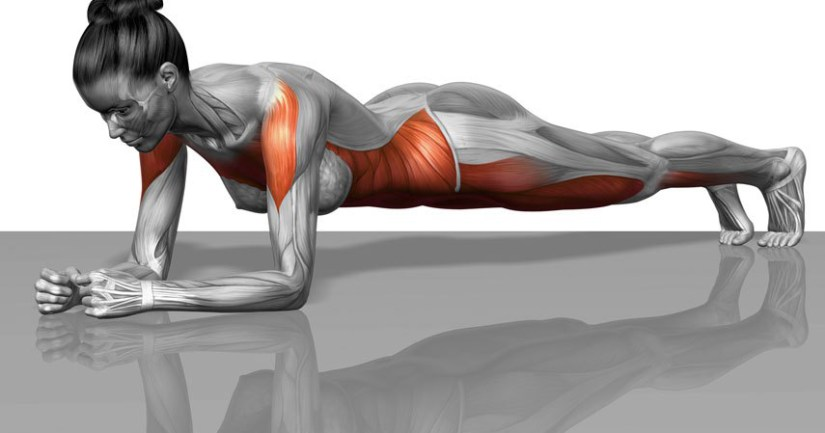 plank-muscles-worked2