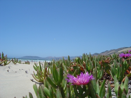 pismo beach flowers and hills