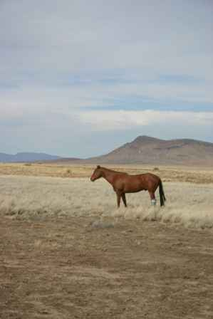 Lake Valley Country Scenic Byway, horses