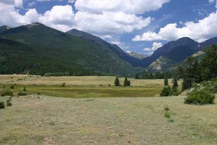 Meadow, Rocky Mountain National Park (RMNP)