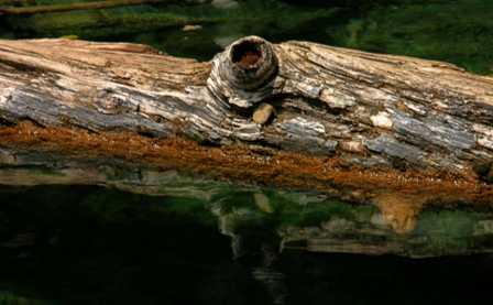 Glenwood Canyon Colorado, Hanging Lake Log