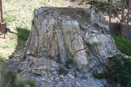petrified tree stump, Florissant Fossil Beds National Monument