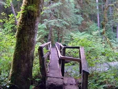 Foot Bridge, Trail to Marymere Falls, Olympic National Park