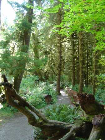Hoh Rainforest, Hall of Mosses, Olympic National Park