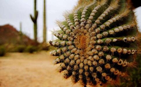 1050_saguaro