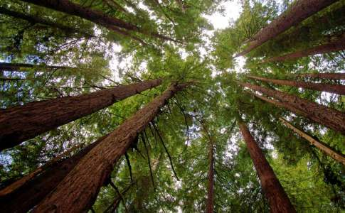 1200_15b_redwoodgrove