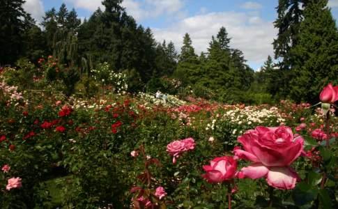 1200_06d_rosetest