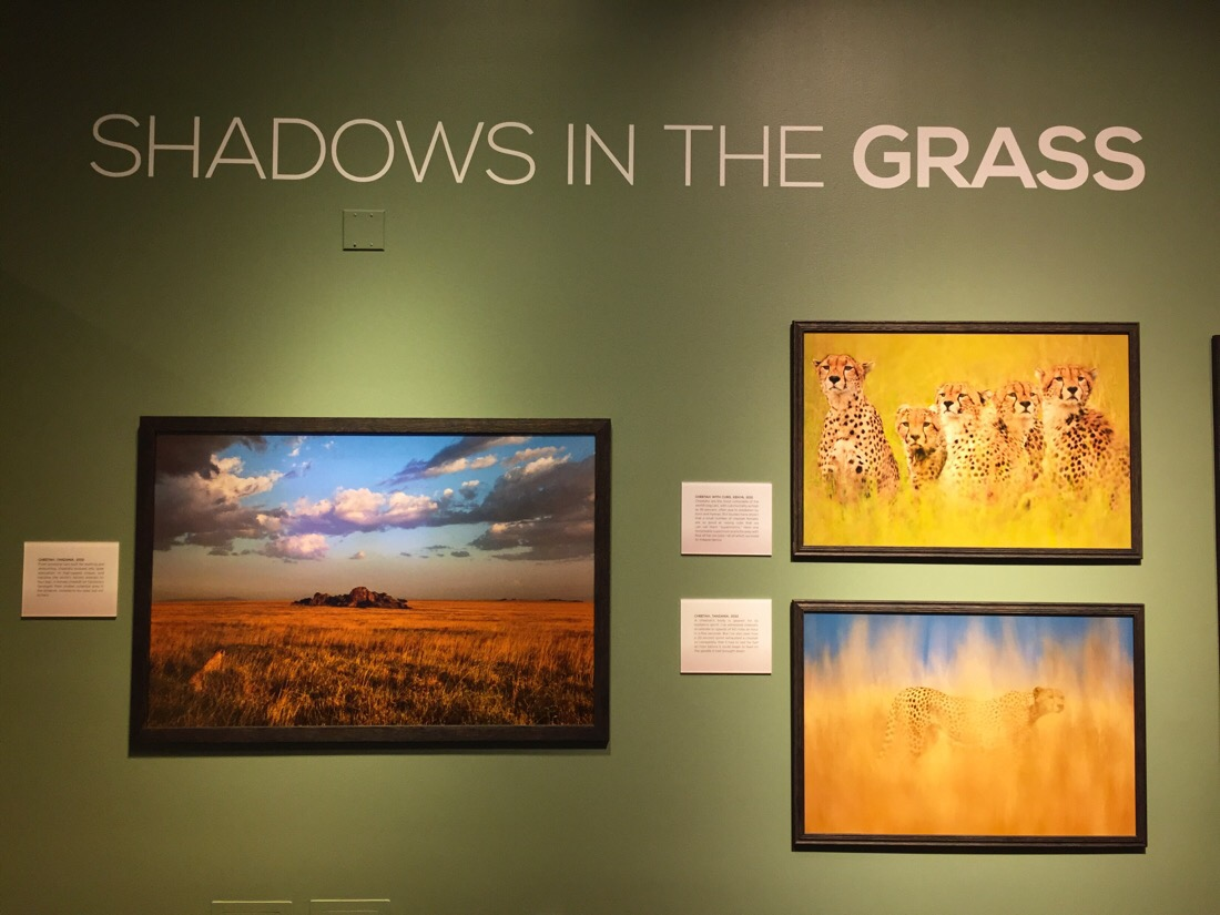 into africa photographic exhibit at the smithsonian natural history museum in washington dc