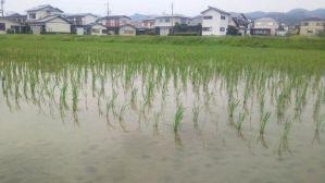 和歌山県・田園