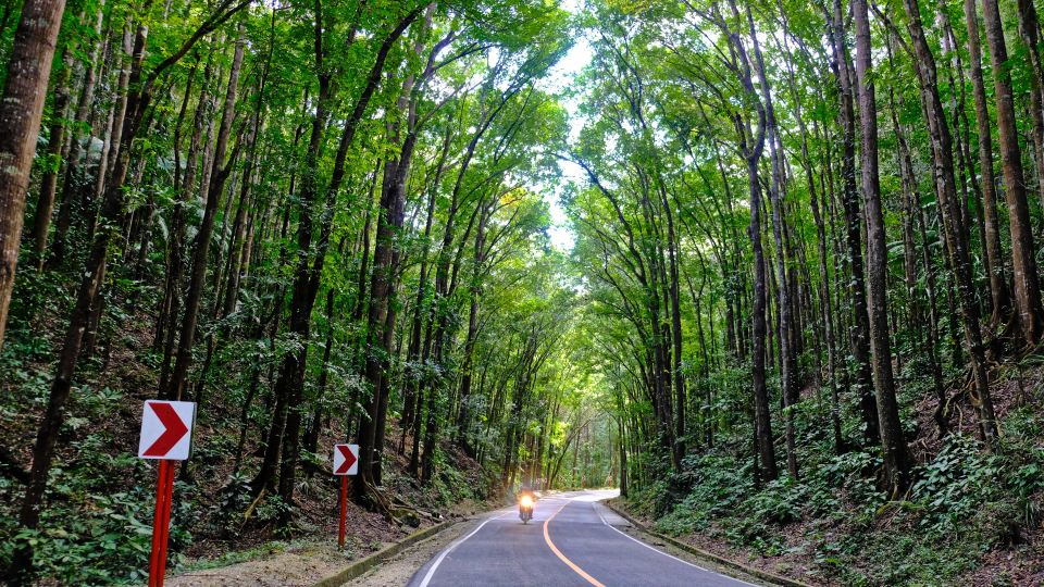 Man Made Forest, Bohol, Philippines
