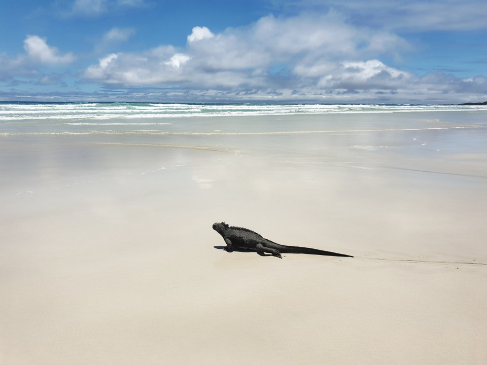 enchanted galapagos lodge, Santa Cruz, Ecuador, Galapagos