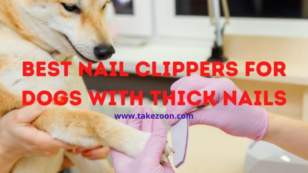 Best nail clippers for dogs with thick nails