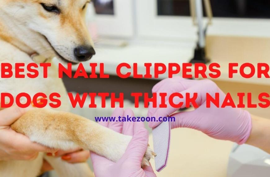 Best Nail Clippers For Dogs With Thick Nails || 9 Best Nail Clippers For Dogs With Thick Nails In 2021