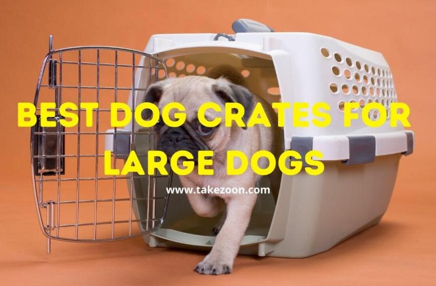 Best Dog Crates For Large Dogs || 5 Best Dog Crates For Large Dogs In 2021