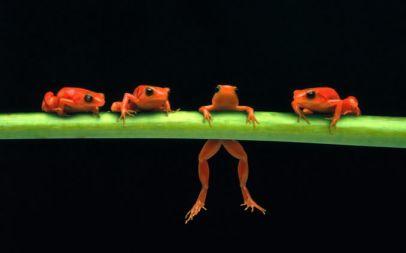 loss aversion frogs