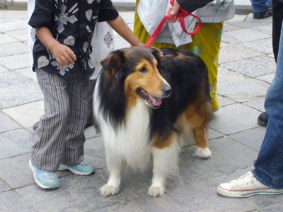 A dog at the shrine