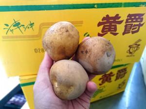 関東煮・おでんに使うジャガイモ「黄爵」