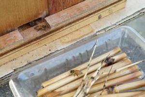 受粉に大忙しの西洋ミツバチさんの巣箱
