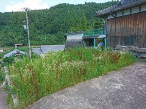 草ボウボウのココが畑予定地