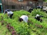 7月の奈良山添村での野菜部活動~草刈り編~