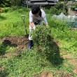 雑草を重ねていきます