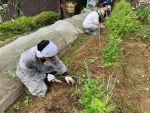 9月の山添村 野菜部~雑草の成長点下の根を切る草刈りは有効だった!~
