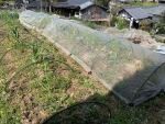 ひとり野菜部~キャベツとレタスの苗を定植し防虫ネットをかけました~