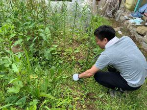 雑草を手作業で刈る島田さん(分店)