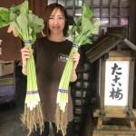 大阪野菜「若ごぼう」が、気まぐれ関東煮(おでん)で登場