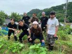 6月の畑部~ヤーコン、サツマイモ、トマトなど育っています~