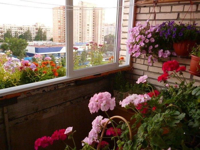 сад на балконе идеи