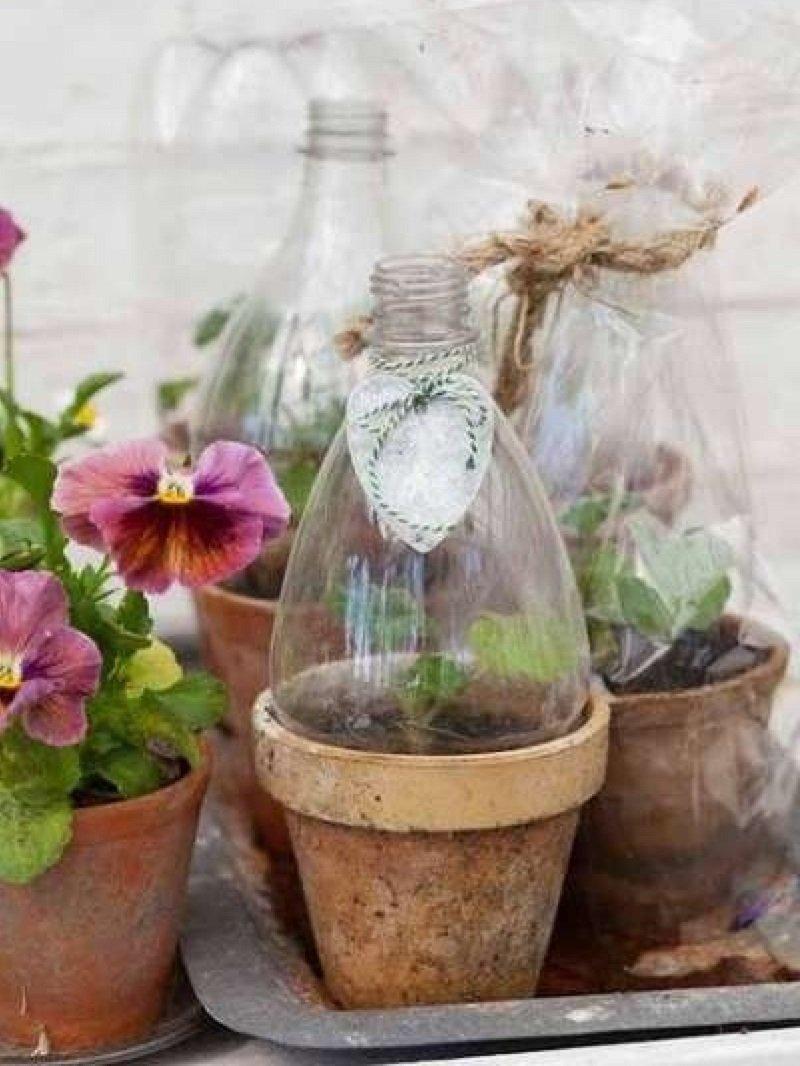 пластиковые бутылки теплица