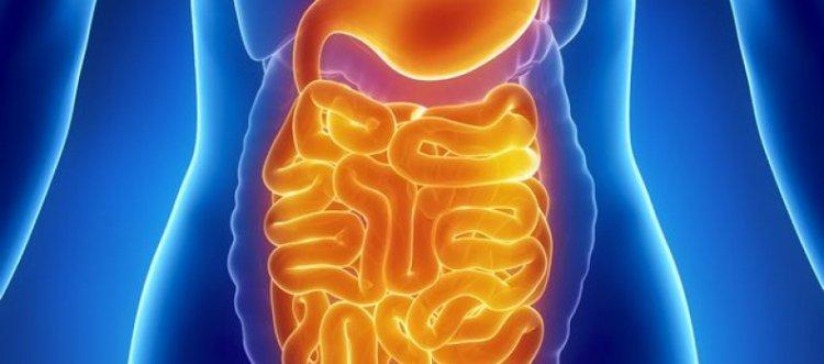 шлаки и токсины в организме