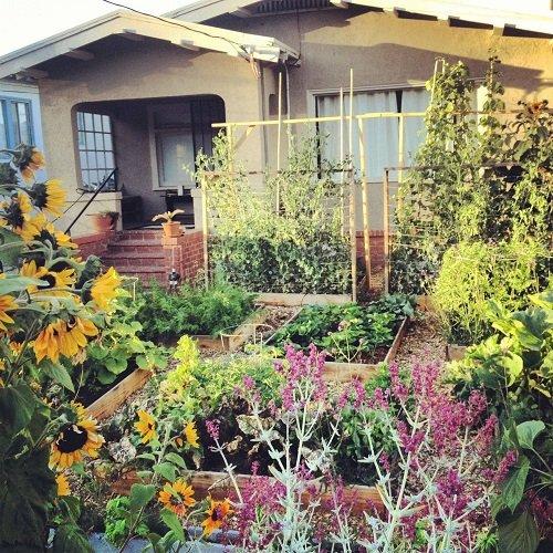 огород возле дома