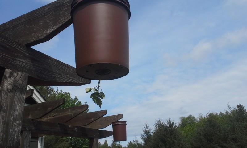 растения для зимнего сада на балконе